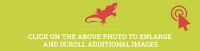 Overlay Salamander Promotion
