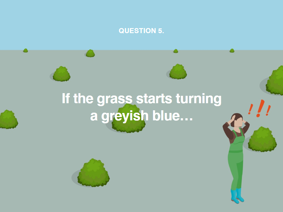 image showing you to water your grass immediately if it starts turning a greyish blue