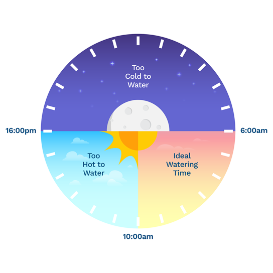 graphic showing the best time to water your lawn in the UK