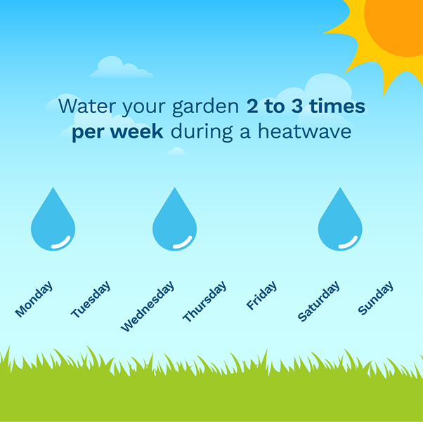 graphic showing you how often to water your lawn per week